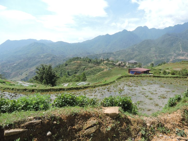 Rice Valley, Sapa Valley