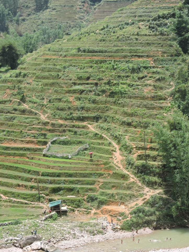 Rice fields, Sapa, Lao Chai, trekking